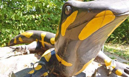 Ausflug: Hexenstein und Riesensalamander
