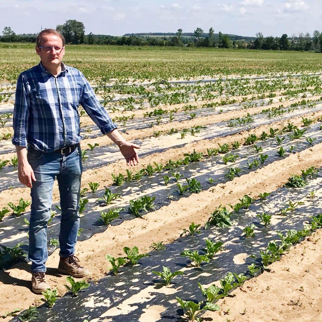 Foto Bio Bio-Zuckerrüben-Bauer Friedrich Karall auf Versuchsfeld mit verrottbarer Folie