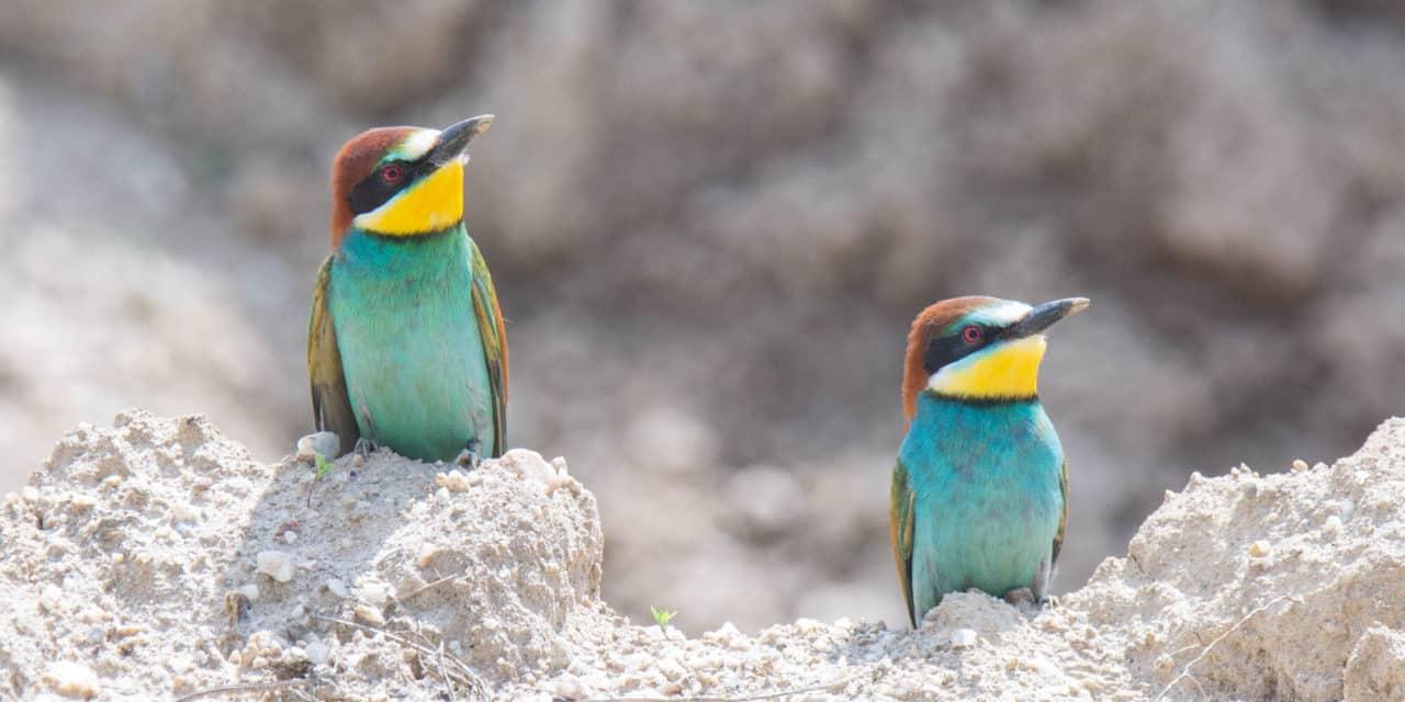 Auf Foto-Safari in und um Rattersdorf-Liebing