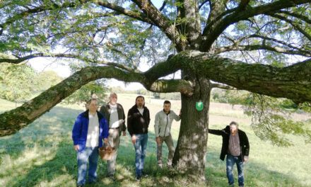 Die Retter der alten Obstbäume